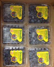 Việt quất Mỹ nhập khẩu – Vinfruits.com