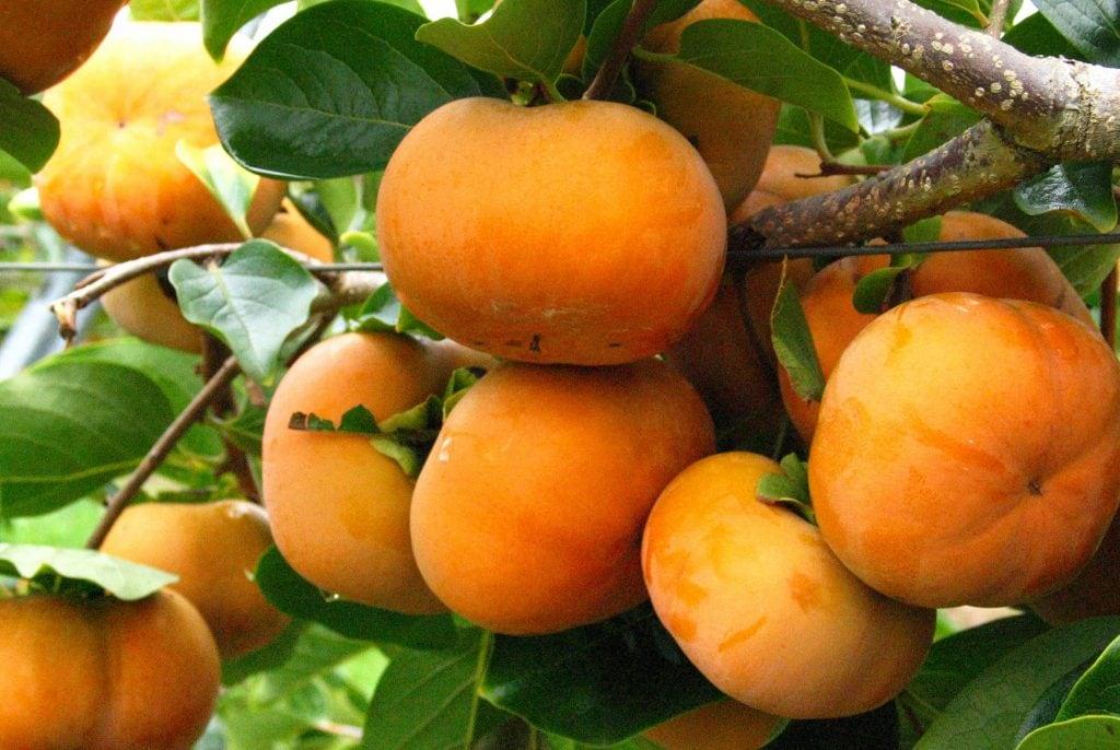 Hong-Uc-nhap-khau-chính-hang-Vinfruits.com