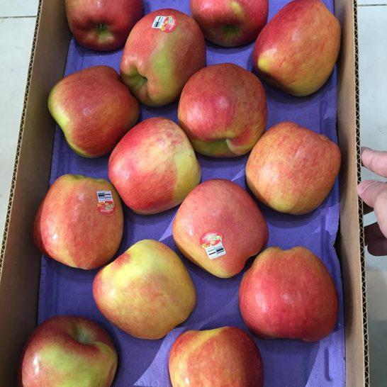 Táo Ambroisa của Mỹ - Vinfruits.com