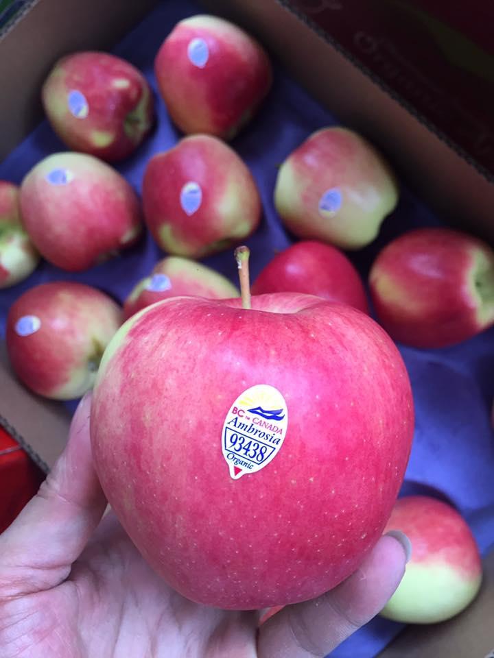 Táo hữu cơ ambrosia Canada Organic - Vinfruits.com