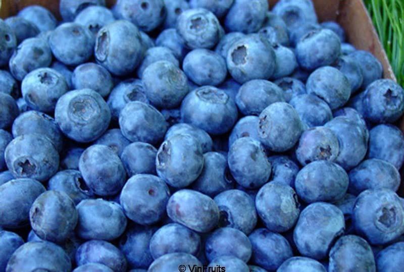 Blueberry Mỹ nhập khẩu chính hãng