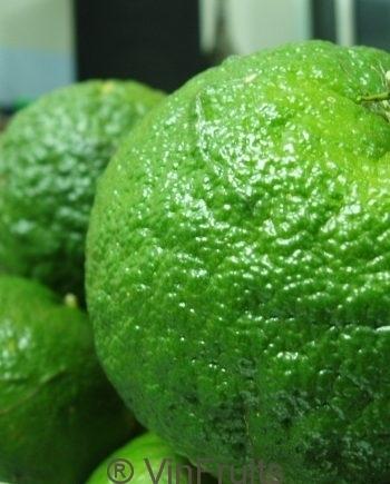 Cam-sanh-Ha-Giang-Vinfruits