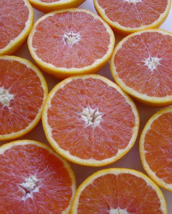Cam-do-Cara-Uc-nhap-khau-vinfruits.com