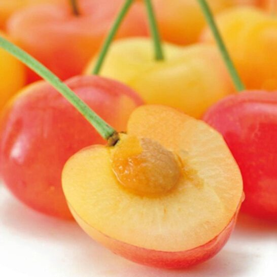 Cherry vang My - vinfruits.com 5