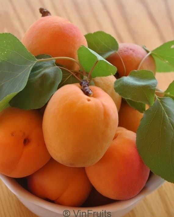mo-huong-son-ha-noi-vinfruits