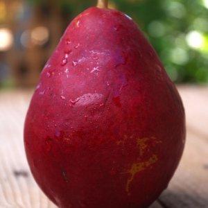 Le-My-nhap-khau-Vinfruits.com