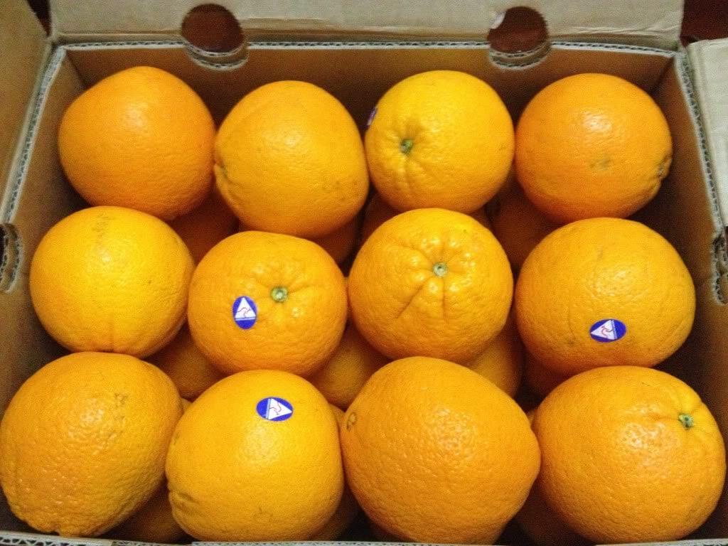 quyt-uc-nhap-khau-vinfruits.com