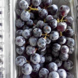 Nho tiêu thomcord grapes 03