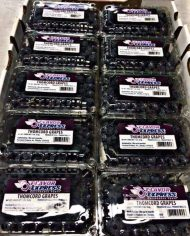 Nho tiêu thomcord grapes