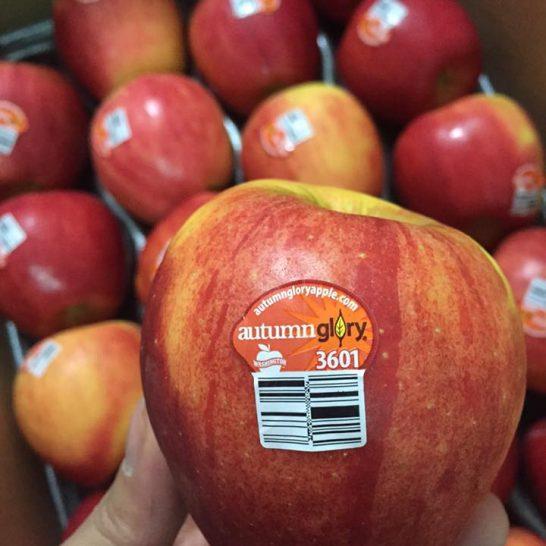 Tao Autumn Glory Mỹ - Vinfruits.com