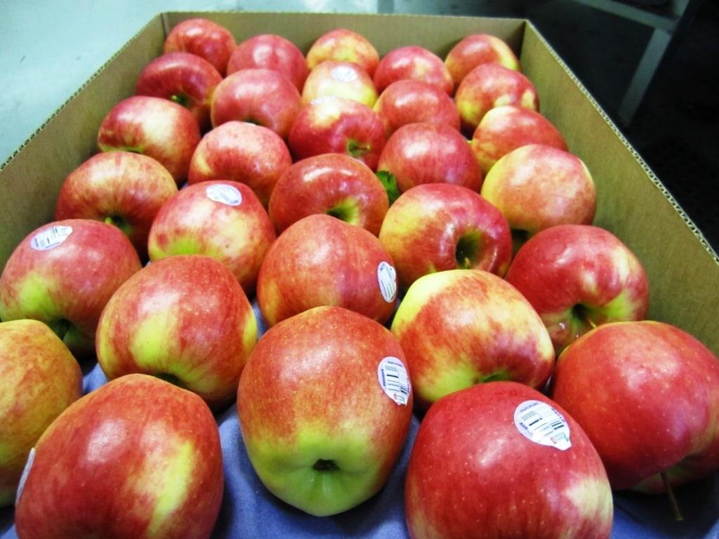 tao-huu-co-ambrosiaI-vinfruits.com