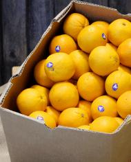 Cam vàng Navel Úc – Vinfruits.com