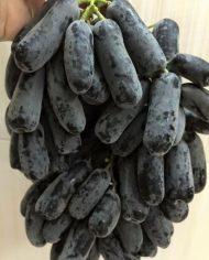 nho-phu-thuy-nho-my-nhap-khau-vinfruits.com