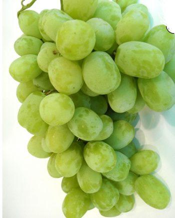 nho-xanh-khong-hat-my-vinfruits
