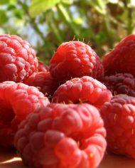 Mam-xoi-do-Uc-nhap-khau-Vinfruits.com