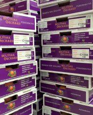 Hồng giòn Newzealand nhập khẩu – Vinfruits.com