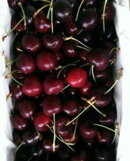 Cherry Newzealand Size 28 – Vinfruits.com