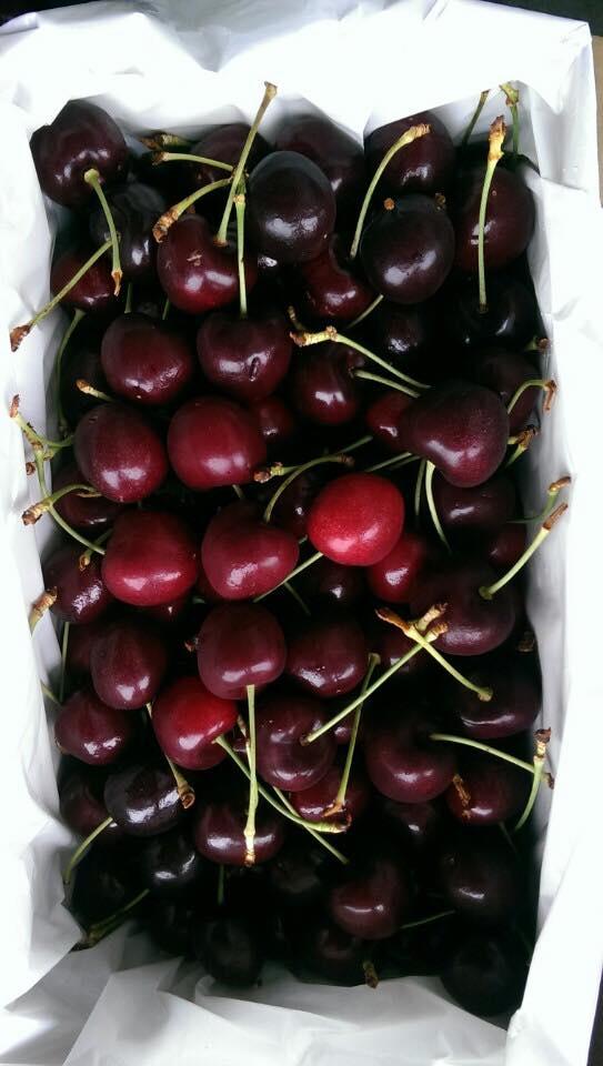 Cherry Newzealand Size 28 - Vinfruits.com
