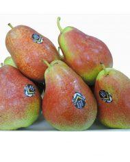 nam-phi-forella-nhap-khau-vinfruits.co