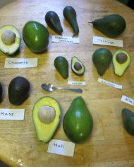 Các loại Bơ Úc nhập khẩu – Vinfruits.com