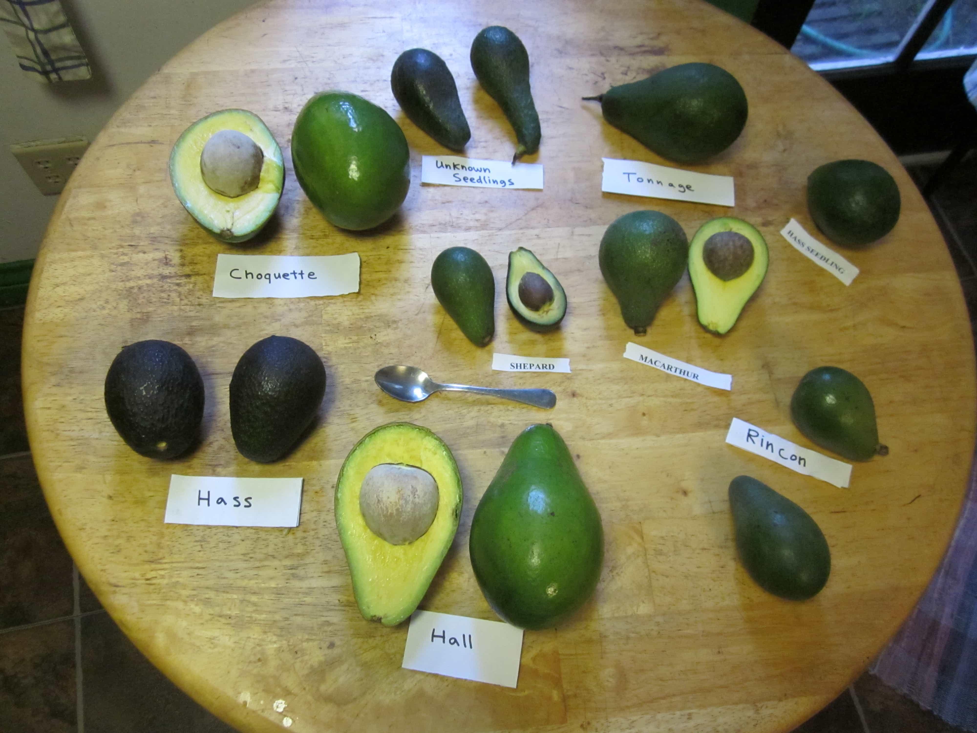 Loại Quả Bơ Úc - Vinfruits