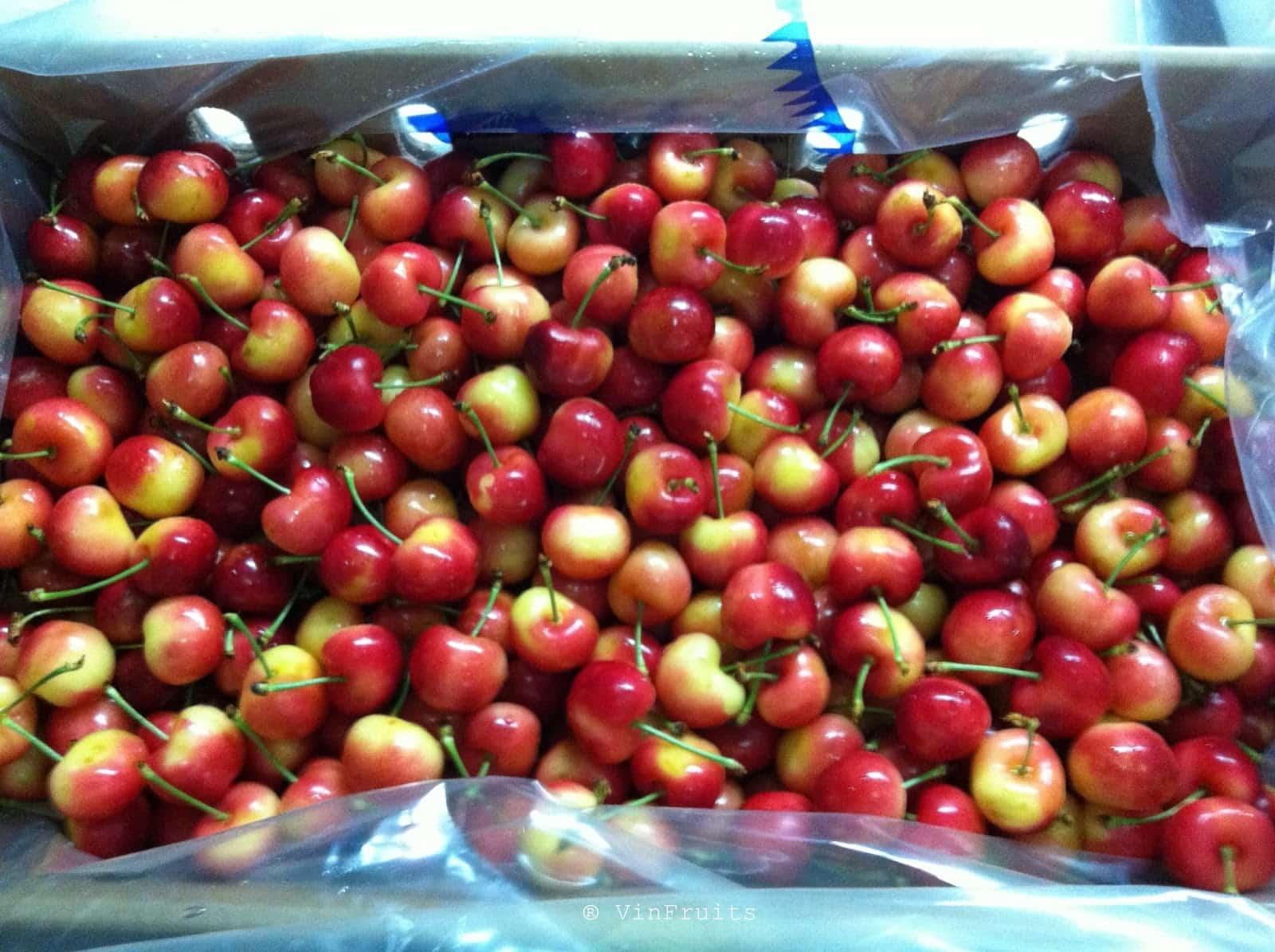 Cherry vàng Canada - Vinfruits