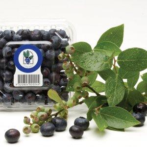 Blueberries-uc-nhap-khau-vinfruits.com