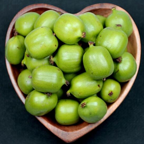 Kiwi berry NZ - vinfruits.com 3
