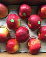 Thung tao Juliet – Vinfruits.com