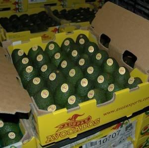 Bơ Hass Úc - Vinfruits.com