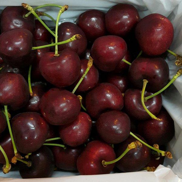 cherry-new-zealand-size-30-vinfruits.com