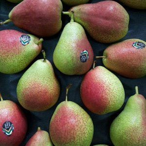 le-nam-phi-vinfruits.com