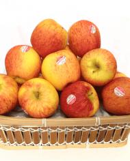 Táo Canada AMBROSIA – Vinfruits.com