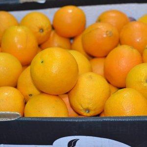 Cam vàng Ai Cập nhập khẩu - Vinfruits.com