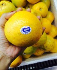 Cam Valencia Sunkit nhập khẩu – Vinfruits.com