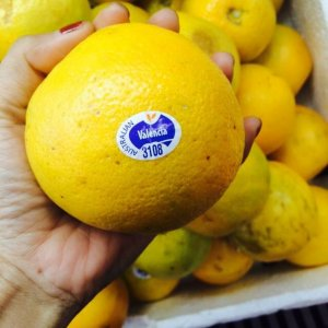 Cam Valencia Sunkit nhập khẩu - Vinfruits.com