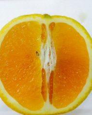 Cam Valencia Úc – Vinfruits.com