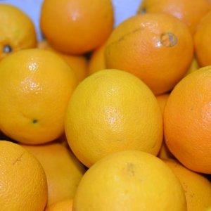 Cam Ai Cập - Vinfruits.com