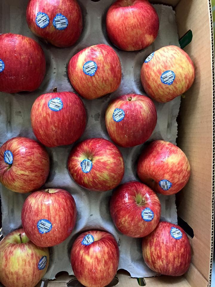 Táo Kiku New Zealand - Vinfruits.com