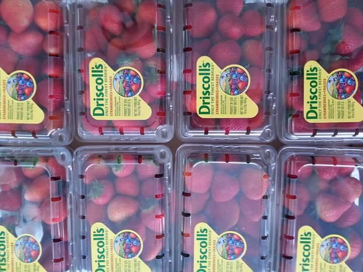 Dâu Tây Mỹ nhập khẩu - Vinfruits.com