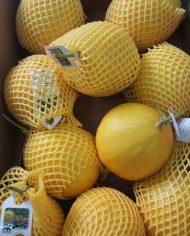 Dưa lưới Malaysia – Vinfruits.com
