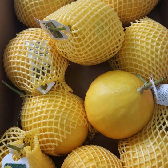 Dưa lưới Malaysia - Vinfruits.com