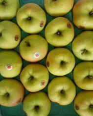 Táo xanh nhật Bản – Vinfruits.com