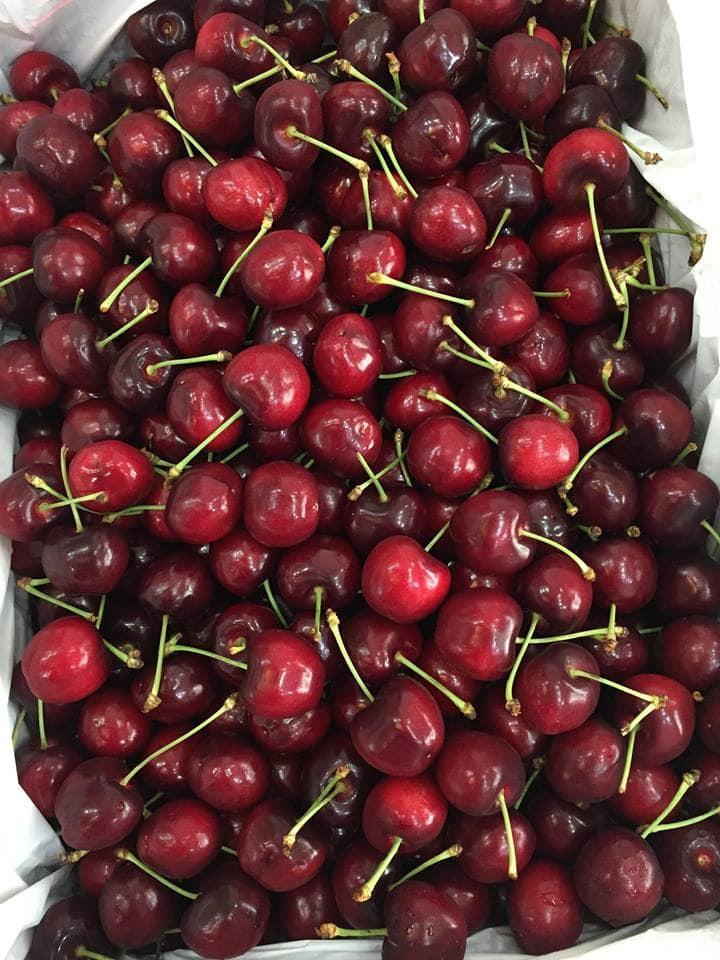 Cherry đỏ Australia nhập khẩu - Vinfruits.com