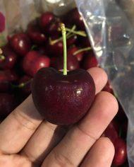 Cherry đỏ Chile nhập khẩu – Vinfruits.com