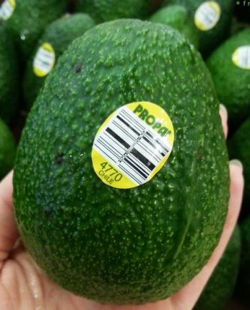 Bơ Chile nhập khẩu - Vinfruits.com
