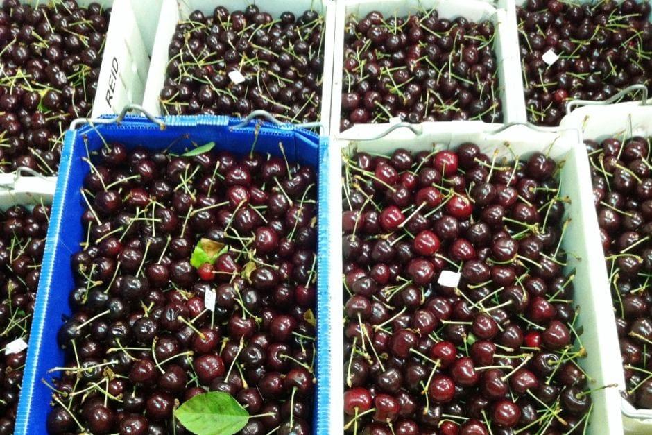 Cherry đỏ Úc - VinFruits