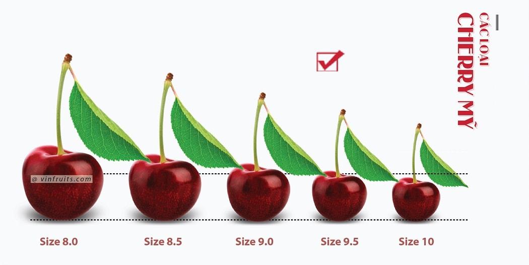 Cac loai cherry My - vinfruits