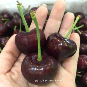 Cherry đỏ Mỹ - VinFruits