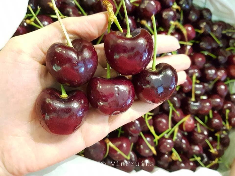 Cherry đỏ Mỹ nhập khẩu - Vinfruits